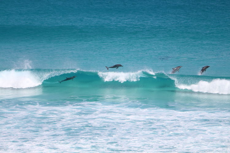 Dolphins having fun at Observatory Beach