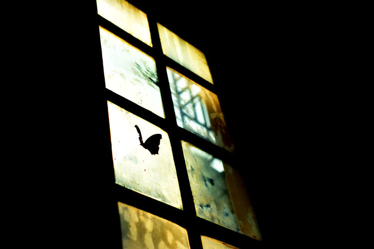Glimpse of the yellow wind... Butterfly Gloomy Gloomy Day Glow Melancholia Melancholic Melancholy Silhouette Silhouette And Sunshine Silhouette Butterfly Silhouettes Sunshine Window