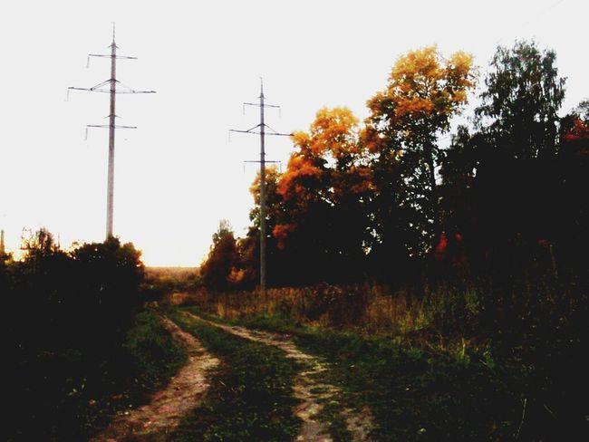 Non-urban Scene Walkway Autumn Autumn Colors Autumn🍁🍁🍁 Dirt Road Long Beauty In Nature No People Nature Memories