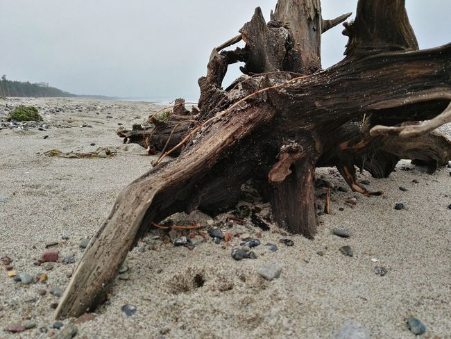 Nature Sand No People Beach Outdoors Tree Trunk Lonely Weststrand Northern Germany EyeEmNewHere