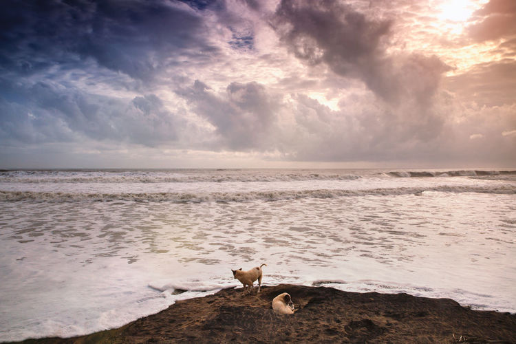 Dogs at shore by scenic sea against sky