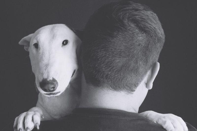 Blackandwhite I Love My Dog Dog My Dog Abrazo Gris Musa Muza Bullterrier Bullterrieringles