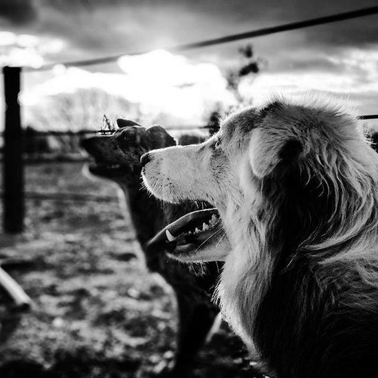 Bigger. Collie Dog Nature Animals Perros