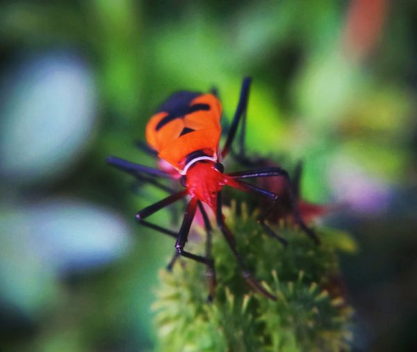 Insect One Animal Animals In The Wild Animal Themes Animal Wildlife Close-up No People Day Red Nature Outdoors Ladybug Teguhpandrian XperiaM2 Bantarkawung