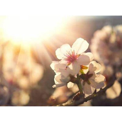 Paradise was made for tender hearts. VSCO Vscocam VSCOPH Vscoedit vscodaily potd