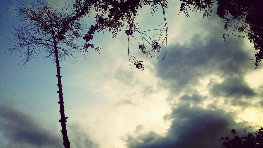 Taking Photo of Trees in the Afternoon ^_^