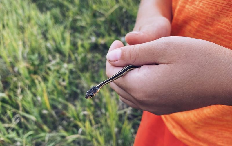 Close-up of boy holding small snake