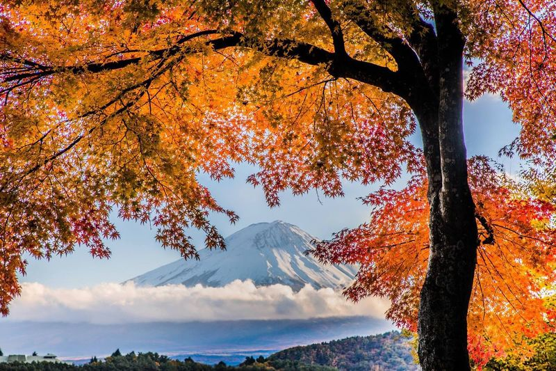 View Of Mount Fuji In Autumn