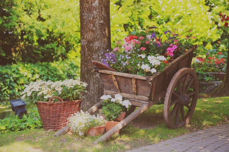 Colorful flowers blooming in cart at park