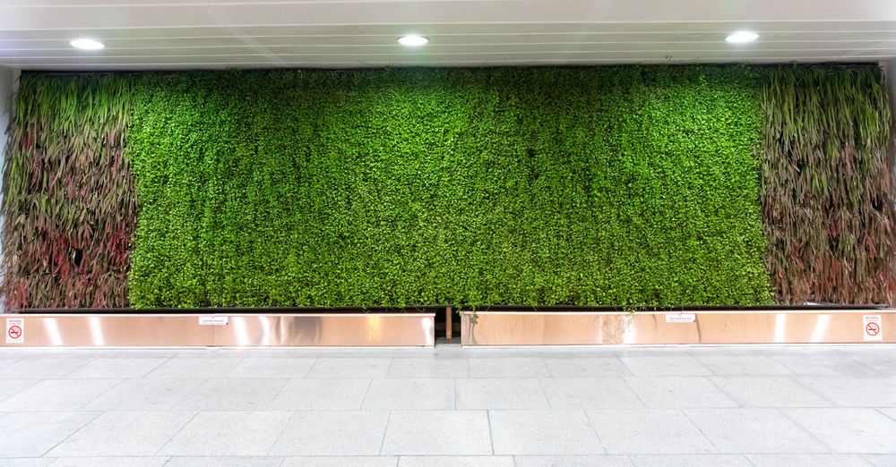 urban vegetal facade - plant facade - plant wall - bangkok Green Color Plant No People Illuminated Growth Architecture Grass Flooring Nature Hedge Outdoors Wall - Building Feature Lighting Equipment Day Tile Entrance Footpath Absence Built Structure Tiled Floor Vegetal Bangkok City
