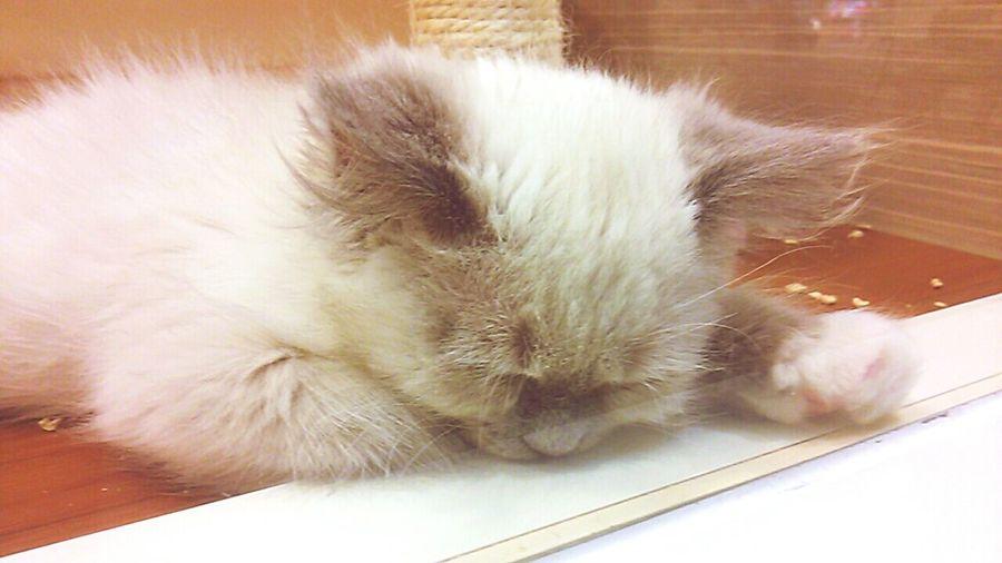 Cat Sleeping Cat Sleepy Cute Cats Kitten Healing Sleeping Face Hallo Kitty Animal Animal Love
