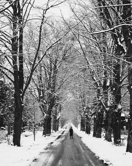Cemetery Cemetery Photography blackandwhite streetphotography bnw_collection n Cemetery Cemetery Photography Blackandwhite Streetphotography Bnw_collection Nature_collection Snowy Trees Vienna Wien Snow Winter Tree The Way Forward Rear View Cold Temperature Walking Adult Beauty In Nature Outdoors Nature