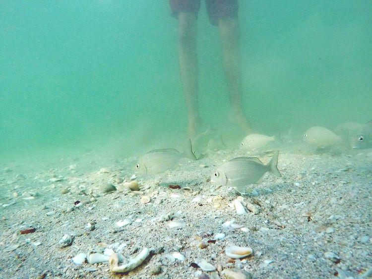Underwater Sea Seaweeds Nature Swimming Sea Fish Beauty In Nature Sea Life Diving Gopro Seaview Goprohero4