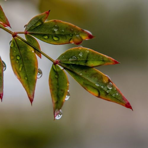 Nature Nature_collection EyeEm Nature Lover Nature Photography Raindrops