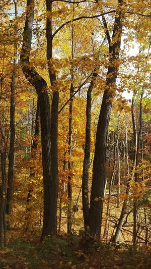 Fall Beauty Fall Colors Oxford, Michigan Michigan Nature Colors Trees And Nature