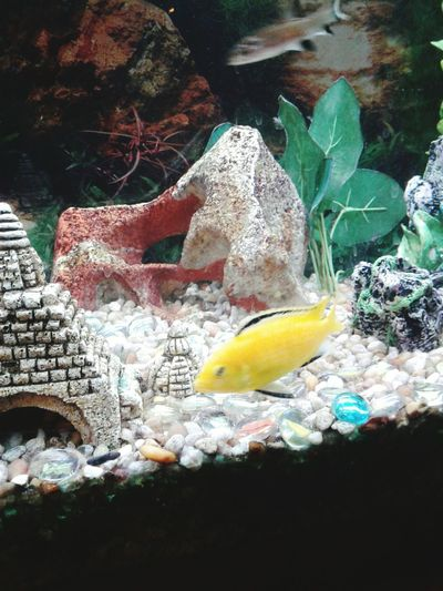 No People Water Close-up The Week On EyeEm Animal Themes Pet Portraits Fish Tank AquariumUnderSea Colors Underwater Fish Pet Portrais Tranquil Scene Tranquility Pebbles And Water EyeEmNewHere