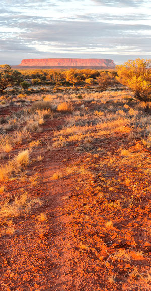 Landscape Park Australia Red Sky Beautiful Desert Wood Kata Tjuta Dry National Grass Land Olgas Drought Rock Outback Nature Travel Tree Outdoor Uluru Scenic Centre Dead Tourism Stone Wild Colorful Sand Hill Day Clear Mountain Bush Sunny Yulara Valley Winds Wilderness Walking Lonely Boulders Desertic Northern Black White Domed