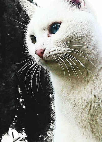 Picturing Individuality Hi! Kitty!  Somethingdifferent Enjoying Life Blue and Green Eye