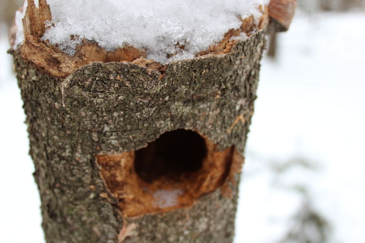 A Woodpecker's Hunt Close-up Tree Trunk Nature Snowy Trees Tree New Camera Canon Canon 1300d Woodpeckerholes Old Log Woodpecker Focus On Foreground