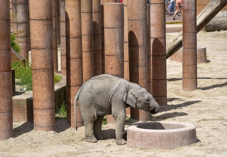 Elephant standing in zoo