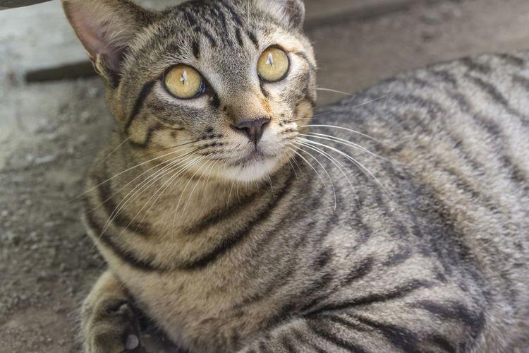 Yamanashi,japan Cat 猫 山梨県 Place Of Heart EyeEm Place Of Heart Live For The Story EyeEm The Great Outdoors - 2017 EyeEm Awards Pet Portraits The Week On EyeEm EyeEmNewHere