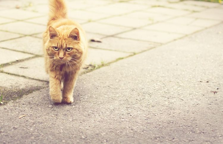 Cat Pets Colourful Beautiful