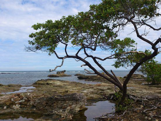 Brazil Beauty In Nature Island Morro De São Paulo Nature Ocean Tree