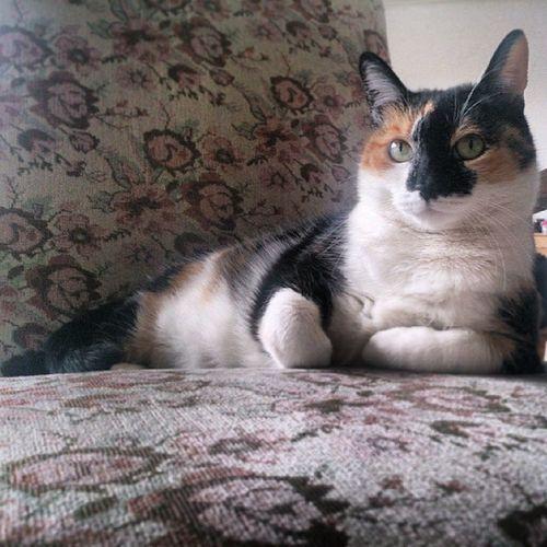 MacaMacy Cat Cats Pet pets nature belgrade beograd serbia srbija naturelovers