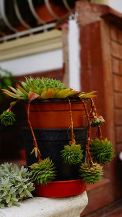 Cactus Cactus Flower Close-up Plant Window Box Fern Succulent Plant Barrel Cactus Aloe Vera Plant Thorn Blooming Needle - Plant Part Bonsai Tree Prickly Pear Cactus Potted Plant Window Sill Flower Pot Frond Spiked Tassel EyeEmNewHere