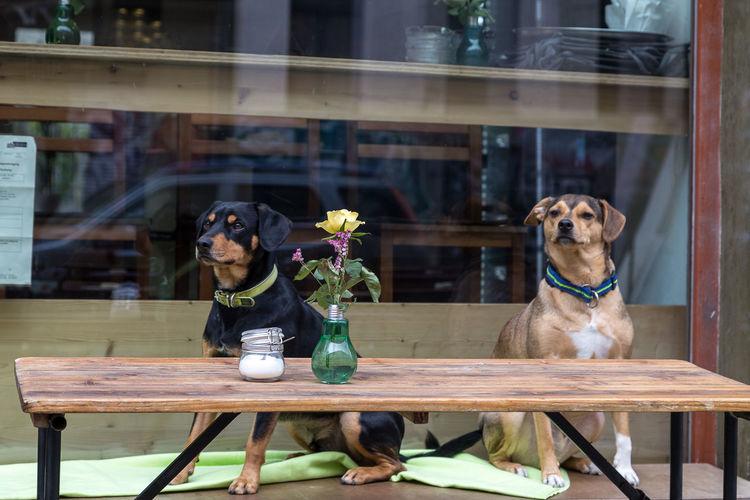 Café Eigenzeit Cafe Day Dog Flower No People Sitting Togetherness