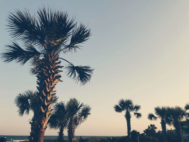 Beach Life Beach Photography Palm Trees Vintage Look Vintage Style Sky Tree Plant Growth Beauty In Nature Tranquility Nature Scenics - Nature Sunset Palm Tree Tropical Climate