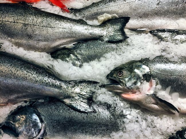 Animal Themes Salmon Fish Fresh Ice Healthy Eating Healthy Lifestyle Food Food And Drink EyeEm Nature Lover Eye4photography  For Sale Market Nutrition Omega 3 Oil Pike Place Market Healthy Food Health Nature No People Pets Close-up Day Outdoors