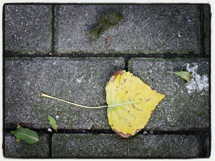 Fallen leaves on road