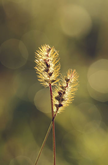 Intercrossed plants in nature Back Light Backlight Bright Grass Morning Nature Nature Photography Plant Plants Plants 🌱 Sunlight Sunny Back Lit Bokeh Bokeh Photography Brightly Lit Close-up Fountain Grass Intercross Macro Nature_collection Plants And Flowers Stem Sunny Day Wildplant