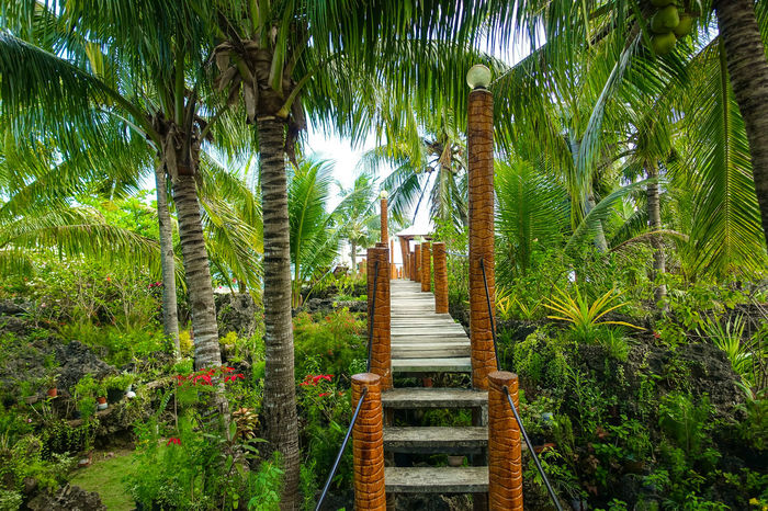Concrete steps and pathway through coconut tree jungle Backpacking Banatayan Island Bantayan Island Beach Resort Canopy Canopy Of Trees Cebu Coconut Trees Dense Jungle Digital Nomad Exotic Exotic Destination Ferns Filipino Culture Island Holiday Island Living Island View  Jungle Life Paradise Island Philippines Philippines Photos Pinoy Sweltering Tropical Plant Tropics