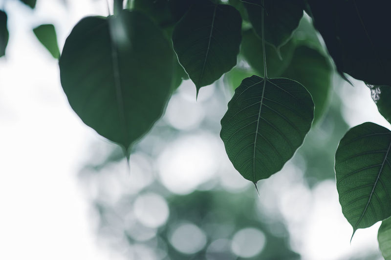 Close-up of leaves on branches