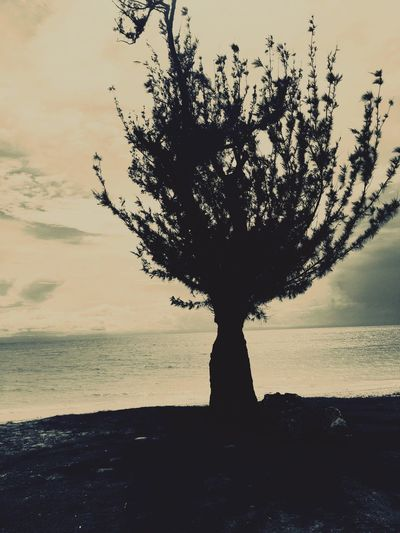 Whomping Willow Sea Tree Silhouette Sunset Nature Beauty In Nature