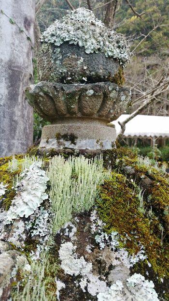 Ultimate Japan Shinto Shrine Fukuoka,Japan In The Mountains NewYearsDay Emori KYUSHU