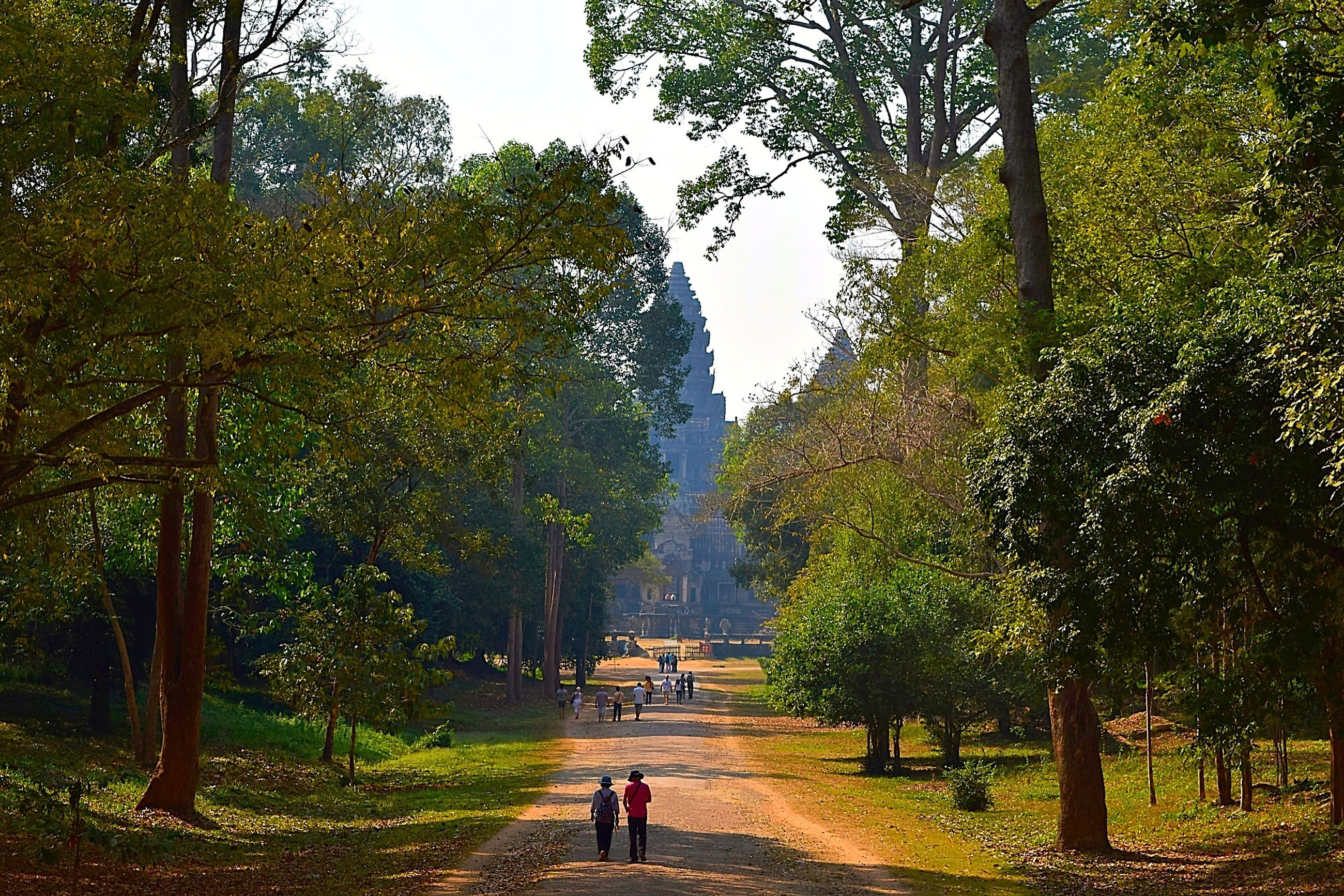 tree, lifestyles, rear view, leisure activity, the way forward, walking, men, full length, person, footpath, forest, growth, nature, tranquility, dirt road, diminishing perspective, green color