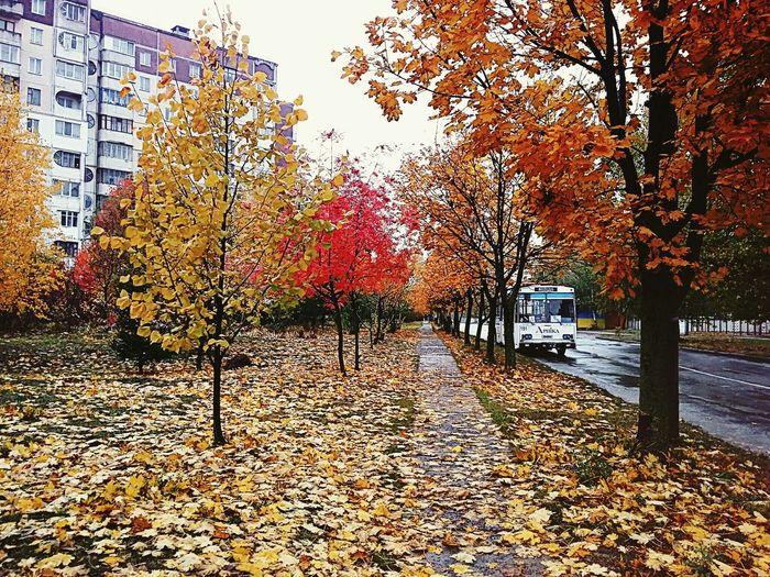 Autumn Ternopil Samsung Galaxy A3 EyeEm Best Shots EyeEm Nature Lover Trees Leaf Path Trolleybus EyeEm