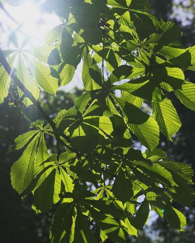Leaves Green Plant Leaf Plant Part Growth Green Color Beauty In Nature Nature Sunlight Freshness Tree Fragility