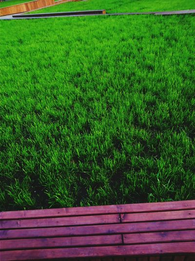 Bench on field