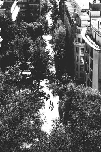 We are legend // Santiago de Chile // Feb'17 Tree Architecture Built Structure Building Exterior Outdoors Nature No People Day Streetphotography Reportage Santiago De Chile Chile Aerial View City Urban Blackandwhite Monochrome Silhouette Two TCPM The Photojournalist - 2017 EyeEm Awards