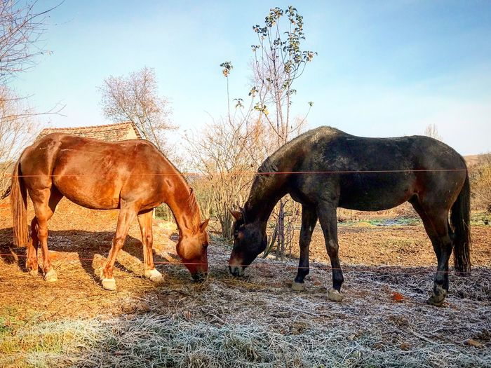 Sun and shadow Animal Themes Horse Domestic Animals Clear Sky Togetherness Field Nature EyeEm Diversity