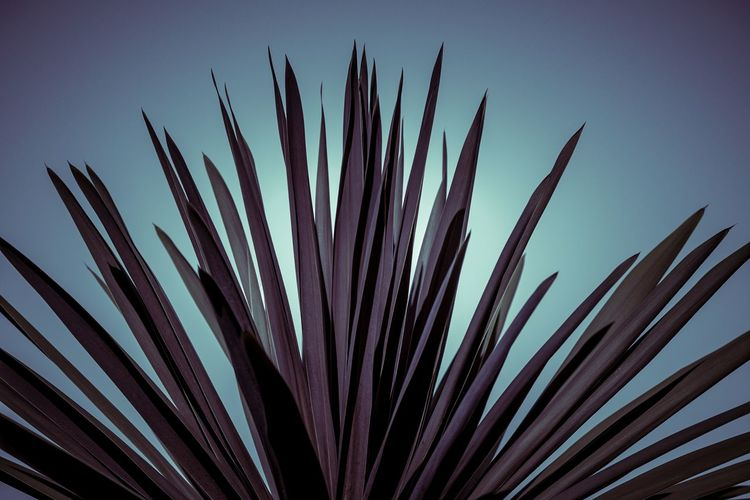 Spiky purple plant Nature Nature Photography Plant Life Turquoise Colored Beauty In Nature Blue Botanical Botany Clear Sky Close-up Day Focus On Foreground Growth Leaf Low Angle View Nature Nature_collection No People Outdoors Plant Plant Part Purple Spiky Still Life Tranquility EyeEmNewHere The Still Life Photographer - 2018 EyeEm Awards