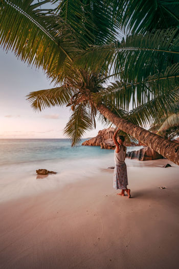 Woman standing by palm tree at beach during sunset