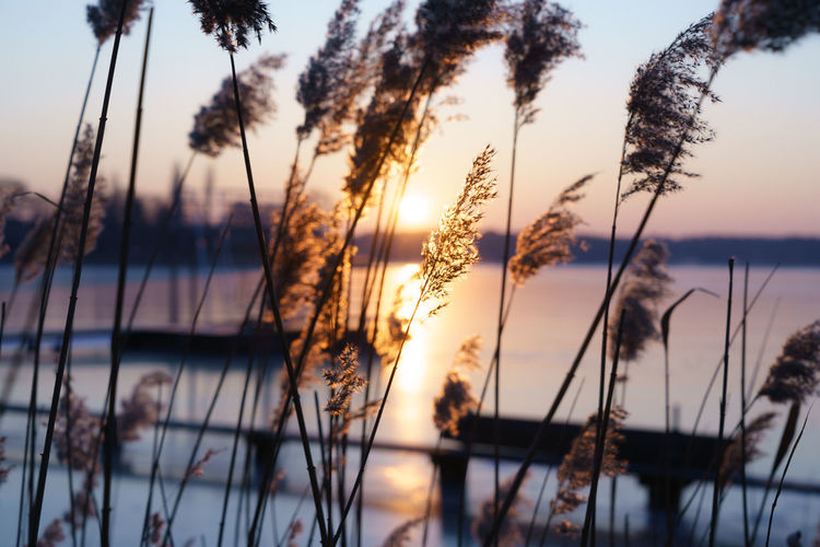 Blick zum Sonnenaufgang durchs Schilf Brandenburg Morning Light Schilf Schilfrohr Sonnenaufgang Sonnenschein  Sunlight Beauty In Nature Close-up Focus On Foreground Lake Lake View Nature Nautical Vessel No People Outdoors Plant Silhouette Sonne Storkow Storkowersee Warm Light Water