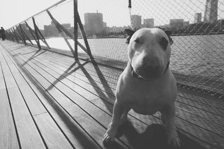 Yokohama Japan Blackandwhite Dog Animal Themes Mammal One Animal Domestic Animals Pets Outdoors Close-up No People Day Sky