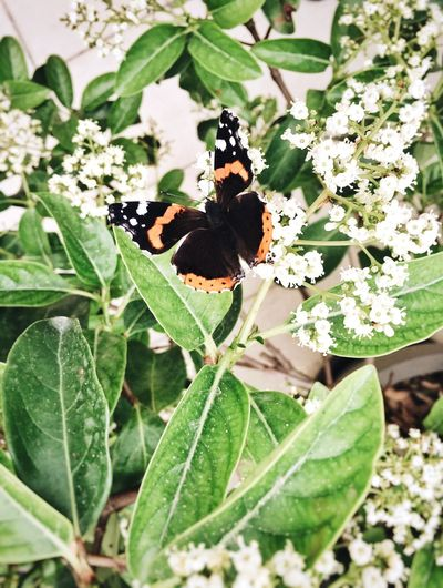 Gettyimages Gettyimagesgallery Getty X EyeEm Colors Colorful Butterfly Colour Of Life