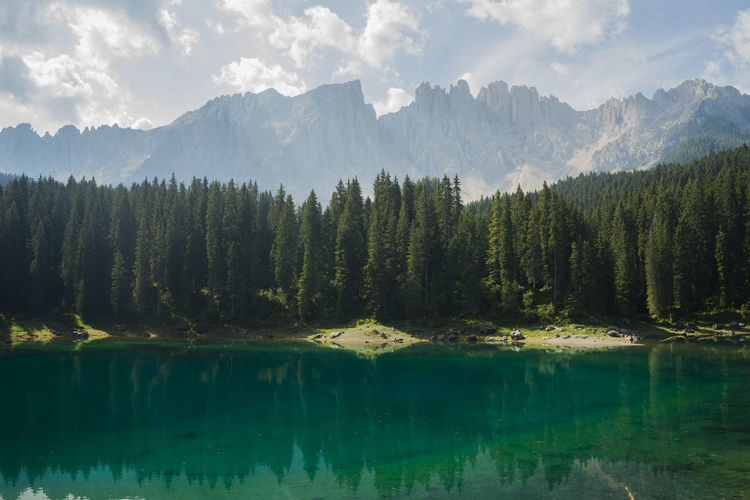 Carezza Carezza Lake Dolomites Green Alps Coniferous Tree Day Forest Growth Italy Lake Mountain Nature No People Non-urban Scene Outdoors Pine Tree Pine Woodland Plant Reflection Reflection Lake Sky Tree Turquoise Water